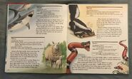 My First Book of Animals from A to Z (25)