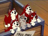 Puppies-balto-23539887-800-600