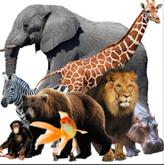 Realistic Alex, Marty, Melman, Gloria, Mama Mirabelle, Dennis, Grizz and Darwin