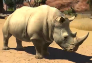 Southern-white-rhinoceros-zootycoon3