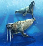 ZT-Pacific Walrus
