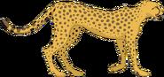 CO3000 Cheetah