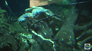 Cincinnati Zoo Snapping Turtle