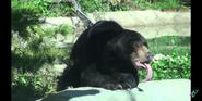 Columbus Zoo Sun Bear