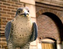 Falcon the falcon.jpg