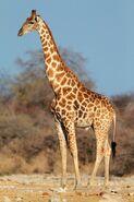 Giraffe (V2)