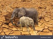 Global Warming Elephants