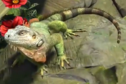 Green-iguana-zootycoon3