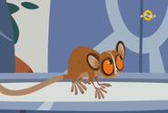 Mouse Lemur (Wild Kratts)