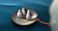 North wind save penguins