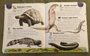Reptiles and Amphibians Dictionary (10)