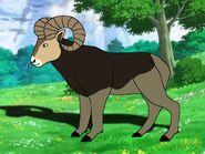 Rileys Adventures Rocky Mountain Bighorn Sheep