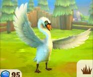 Swan-zoo-2-animal-park