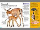 Antelopes Echidnas Kangaroos Koalas and Pigs
