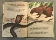 Awesome Animals (Road to Reading) (13)