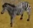 Burchells-zebra-zoo-empire