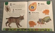 Deadly Creatures Dictionary (13)