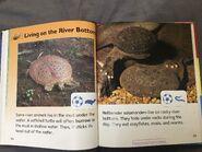 IMG 1529 river animals part 2