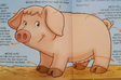 Lucy the Sow