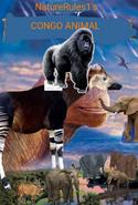 NR1 Congo Animal 2000 Poster