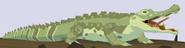 Siamese Crocodile WOZ