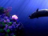 Barracuda (Finding Denno)