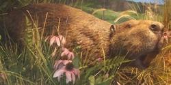 Toledo Zoo Beaver.png