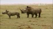 UTAUC White Rhinos