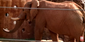 Zoo Anlanta Elephant02
