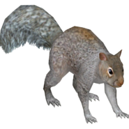 Zoo Tycoon Grey Squirrel