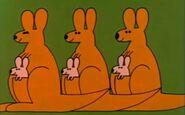 6-kangaroos-fmafafe