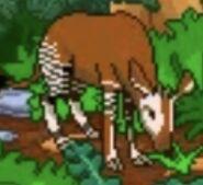 BTKB Okapi