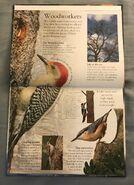 Birds (Eye Wonder) (3)
