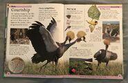 DK First Animal Encyclopedia (24)