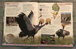 DK First Animal Encyclopedia (24).jpeg