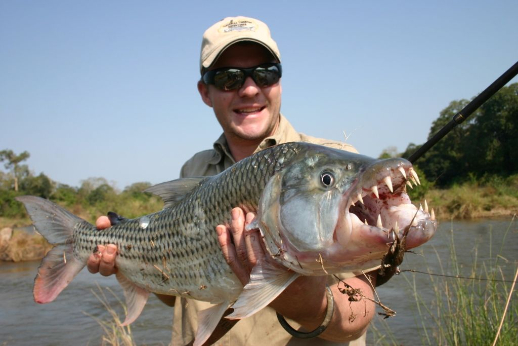 African Tigerfish