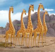 Giraffe TLG