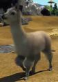 Huacaya-alpaca-zootycoon3