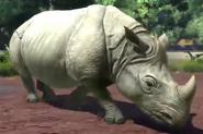 Javan-rhinoceros-zootycoon3