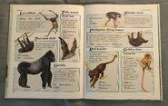 Macmillan Animal Encyclopedia for Children (24)
