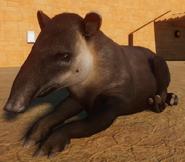 Planet Zoo Bairds Tapir