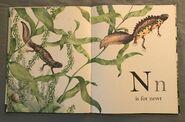 The A to Z Book of Wild Animals (13)