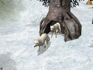 WP2 Arctic Fox