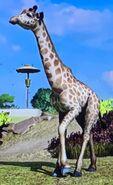 West African Giraffe ZTX