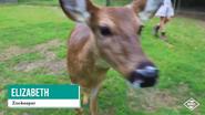 Baton Rouge Zoo Doe