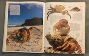 DK Encyclopedia Of Animals (64)