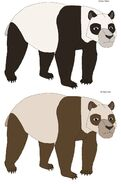 Giant panda subspecies and diffrences