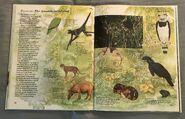 Macmillan Animal Encyclopedia for Children (25)