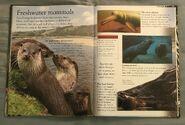 Mammals (Eye Wonder) (17)