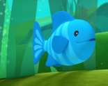 Octo blue angelfish